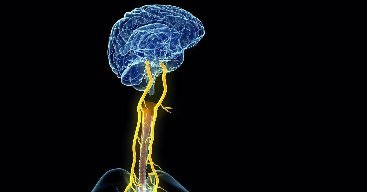 Laryngeal nerves